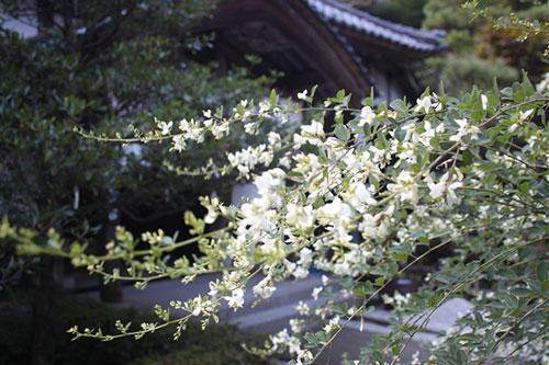 myoshin1710b.jpg